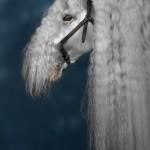 stallion1